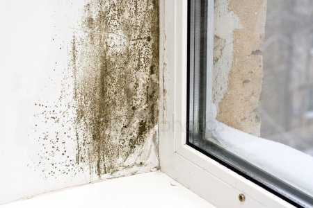 , Mold Removal, San Diego Abatement Services, San Diego Abatement Services